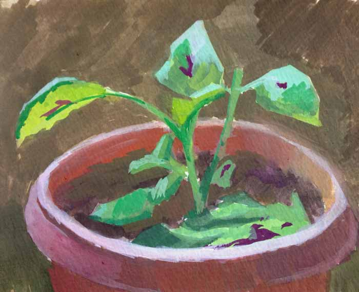 gouache courtney clinton plant